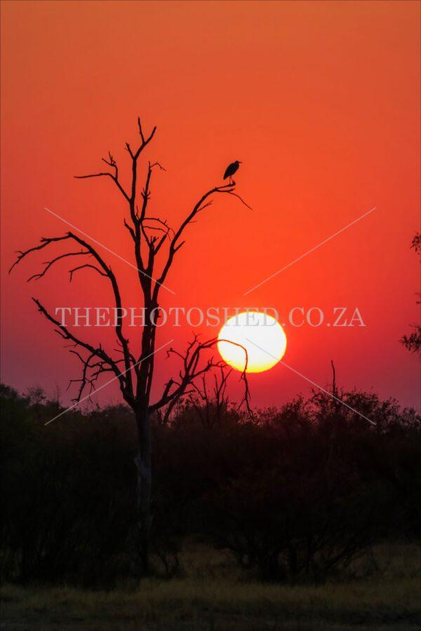Botswana Sunset Silhouette