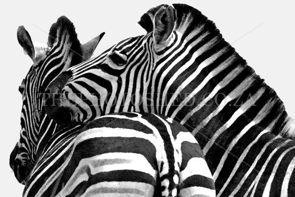 A Pair of Zebras - Kruger National Park