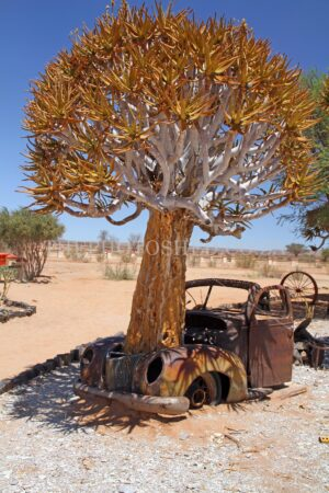How did that get there - Boabab Tree in Namibia