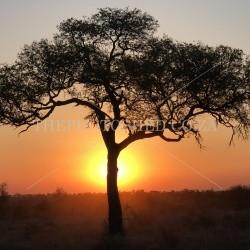 Treescape - Kruger National Park