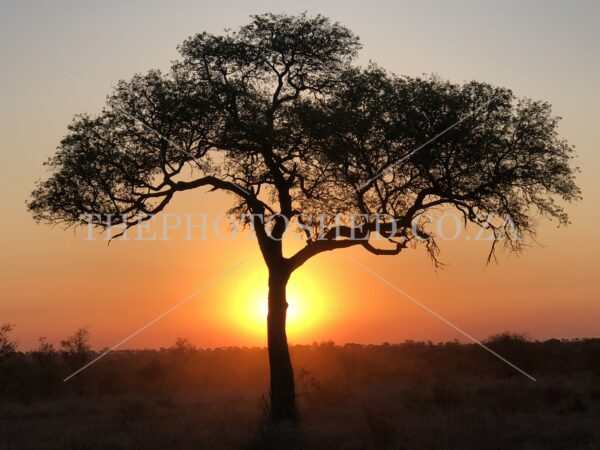 Treescape - Kruger National Park