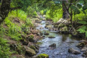 Scenic River flowing in a breathtaking forest landscape