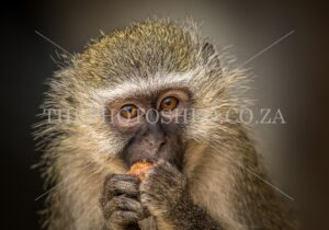 Monkey eating breakfast
