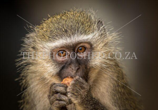 Monkey eating breakfast