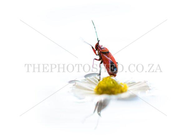 Bug sitting on a flower
